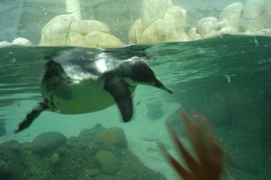 Zoo012